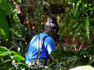 Jasmine Paige in the Orchid House