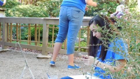 Painting in the bonsai garden