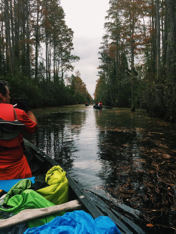 Troop 434 canoeing through the swamp.