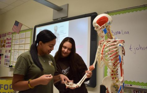 Healthcare students learning about anatomical structures.