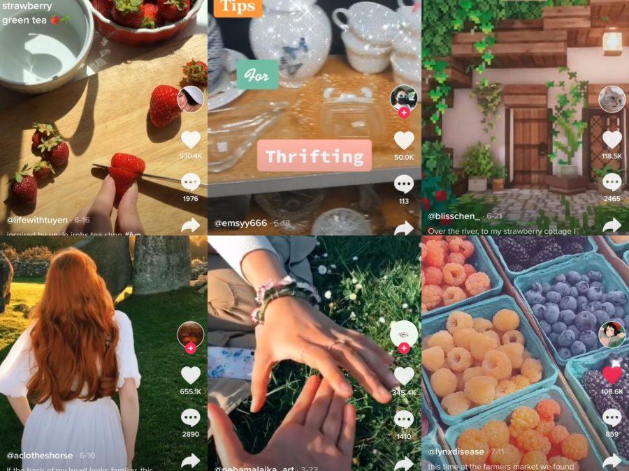 Collage of images courtesy of TikTok's @lifewithtuyen, @emsyy666, @blisschen_, @aclotheshorse, @nehamalaika_art, and @lynxdisease